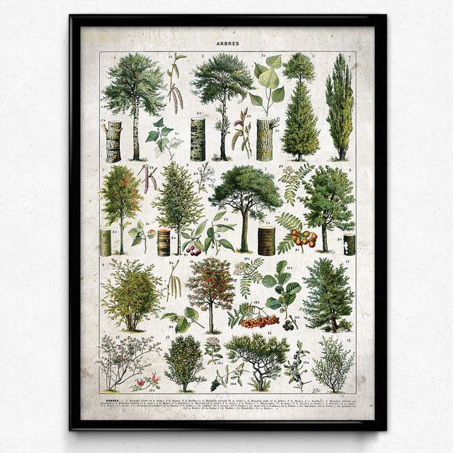 Trees Illustration Vintage Print 4 VP1154 - Orion Wells