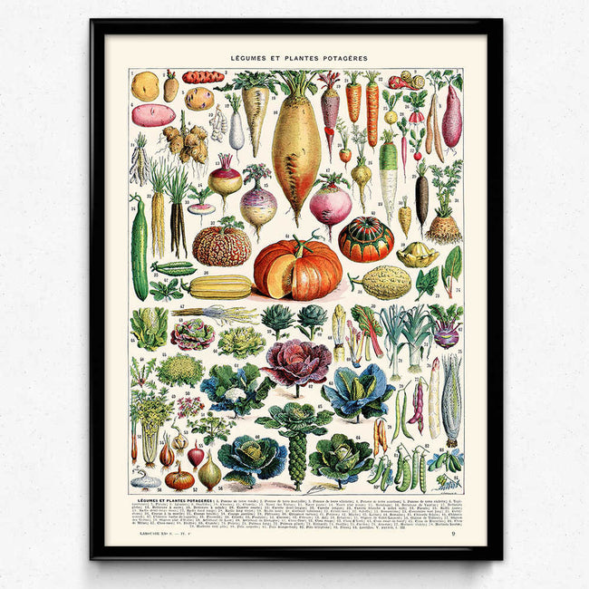 Vegetables Vintage Print 1 - Orion Wells