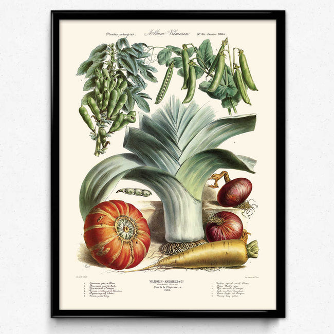 Vegetables Illustration Vintage Print 5 - Vilmorin (VP1089) - Orion Wells