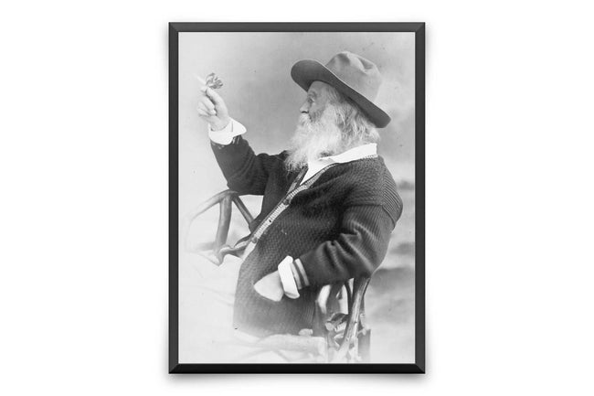Walt Whitman Butterfly Vintage Photo - Muotokuva tulosta kangas VP1206 - Orion Wells