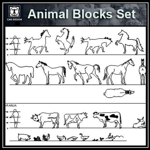 Free Animal Blocks