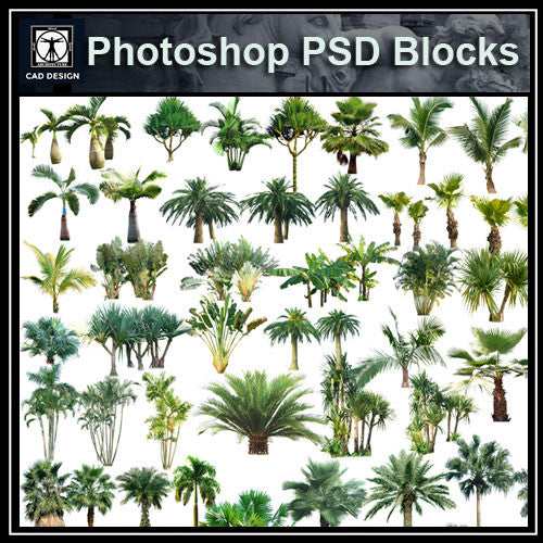 Photoshop PSD Tree Blocks 6 - CAD Design | Download CAD Drawings | AutoCAD Blocks | AutoCAD Symbols | CAD Drawings | Architecture Details│Landscape Details | See more about AutoCAD, Cad Drawing and Architecture Details