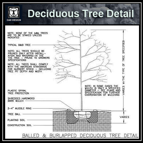 Free CAD Details-Deciduous Tree Detail - CAD Design | Download CAD Drawings | AutoCAD Blocks | AutoCAD Symbols | CAD Drawings | Architecture Details│Landscape Details | See more about AutoCAD, Cad Drawing and Architecture Details