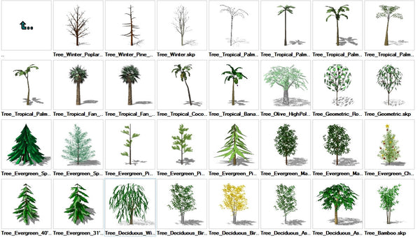 Sketchup Tree 3D models download