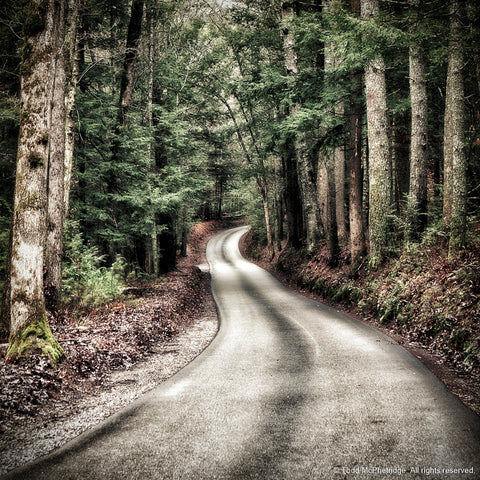 Rustic Road Art Print