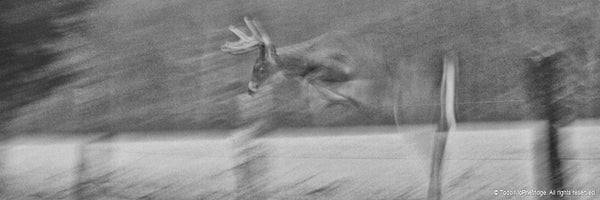 Black and White Big Buck Artwork Whitetail Deer Wall Art