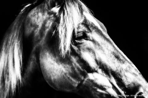 Black and White Beautiful Horse Art Print