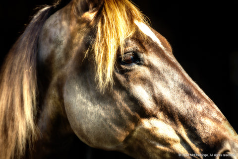 Beautiful Horse Art Prints