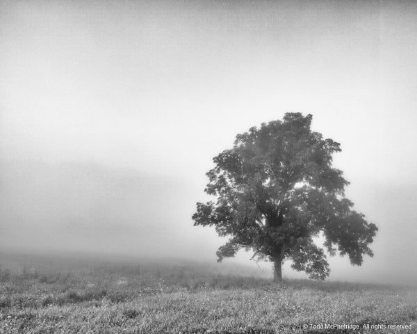 Black and White Rustic Tree Photography for Sale