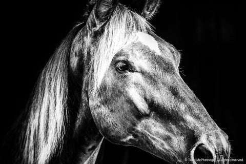 Black and White Horse Artwork