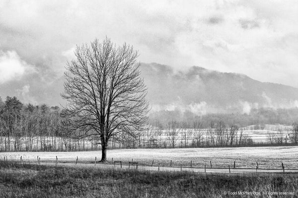 Black and White Tree Farmhouse Art Prints for Sale