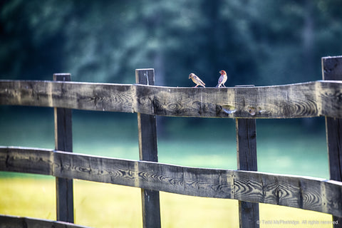 Two Birds Sitting on a Fence Artwork