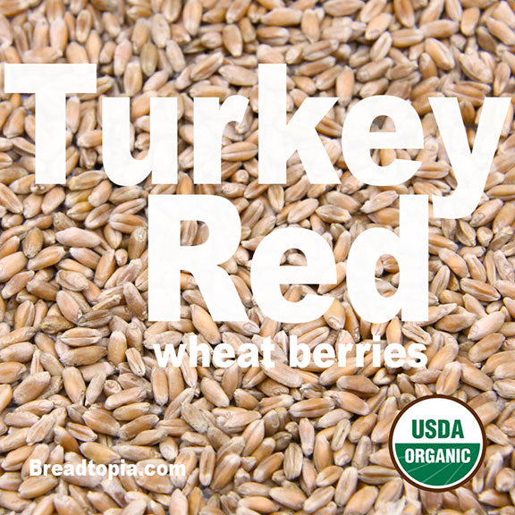 organic-heirloom-turkey-red-wheat-berries-firewalker-ovens-usda-organic