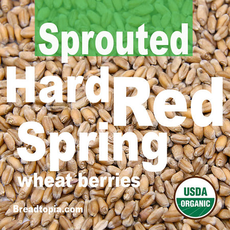 organic-sprouted-hard-red-spring-wheat-berries-firewalker-oven