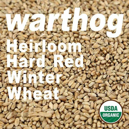 organic-warthog-hard-red-winter-wheat-berries-firewalker-ovens-usda-approved