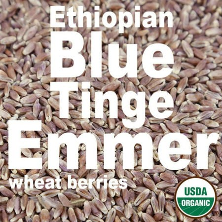 organic_ethiopian_blue_tinge_emmer_wheat_berries-firewalker-ovens-usda-approved