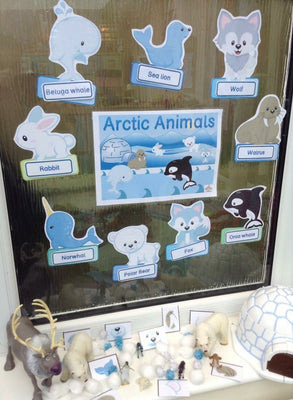 Arctic Animals - Display