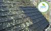 HOW TO CLEAN A ROOF SAFELY, EFFECTIVELY AND WITHOUT BLEACH