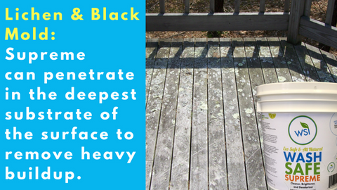 best wood deck cleaner for mold and lichen