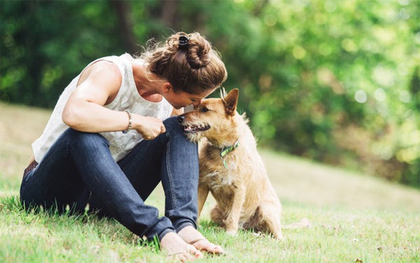 Can CBD Help Our Canine Companions