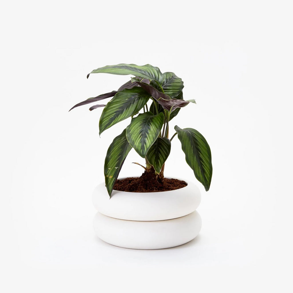 Areaware Stacking Planter Short White Ceramic by Chen Chen and Kai Williams