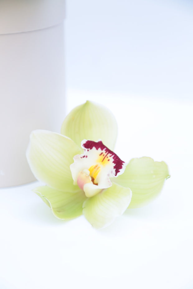 Garden Mix Orchids (Color Options)