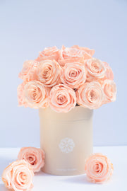 Infinity Roses Peach (Lasts 1 year)