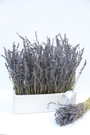 Garden Mix Dried Lavender - MOM 2021