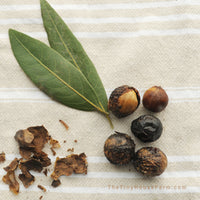bay tree seeds