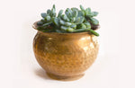 succulent Planter made of brass