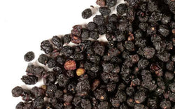 Bulk Organic Elderberries from the Tiny House Farm