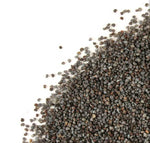 poppy seeds unwashed papaver somniferum seeds