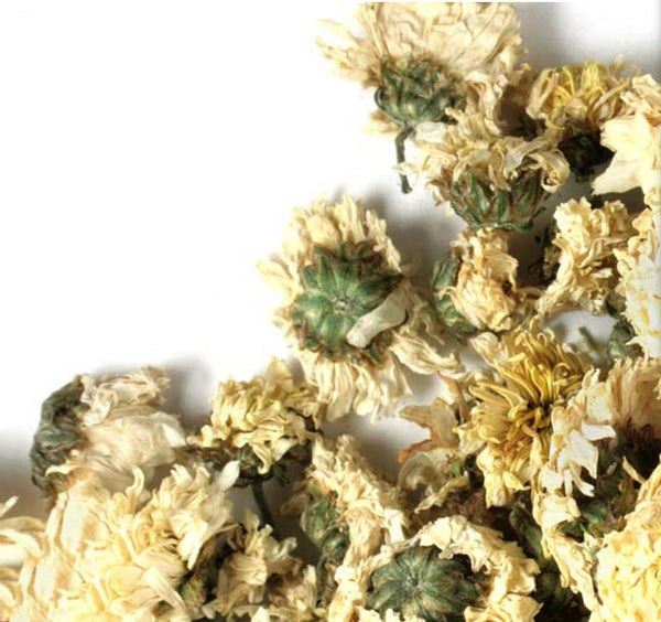 Chrysanthemum flowers dried