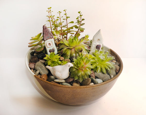 Where to buy fairy succulent garden image