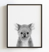 Baby Koala Black and White Printable Art