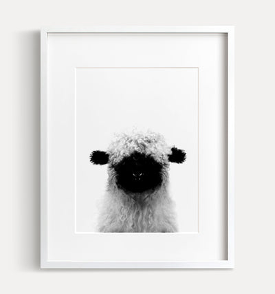 Baby Blacknose Sheep Print - Black and White - The Crown Prints