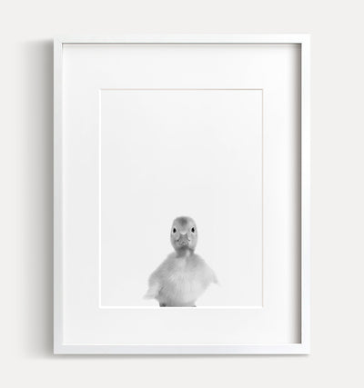 Baby Duckling Print - Black and White - The Crown Prints