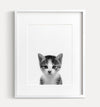 Baby Kitten Black and White Printable Art