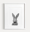 Baby Rabbit Black and White Printable Art