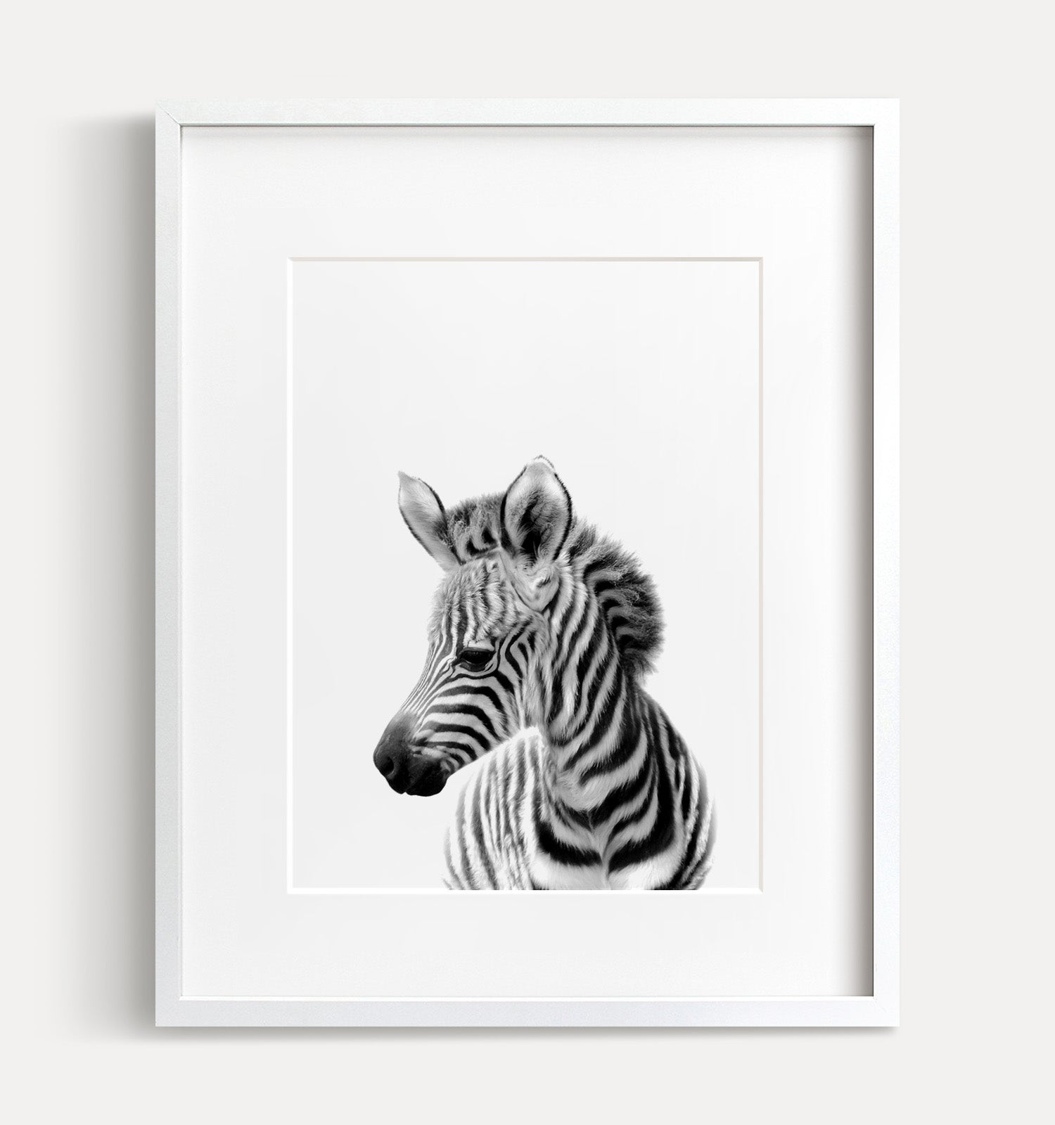 Baby Zebra Printable Art - Black and White