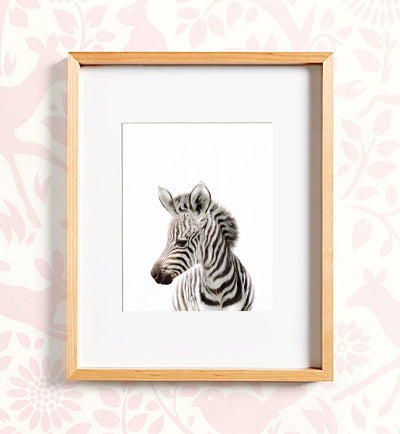 Safari Animal Prints - Set of 8 baby animals - Africa & Asia - The Crown Prints