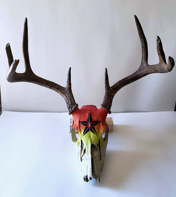 Deer Skull with four tier horns and painted star on forehead