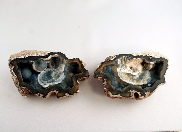 Tampa Bay coral pair