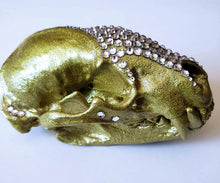 Sparkles - Badger Skull - side view with teeth