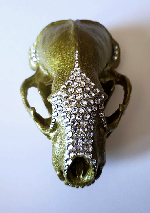 Sparkles - Badger Skull - top view