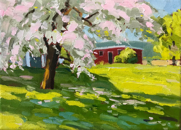 small oil painting of a green lawn in Gaspereau Valley Nova Scotia, with a large pink blossomed tree in the foreground partially obscuring a small red shed. By Mark Grantham.