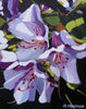 acrylic painting of a bunch of lavender Parkazalea flowers on a black ground by Nova Scotia artist Rhonda Marineau