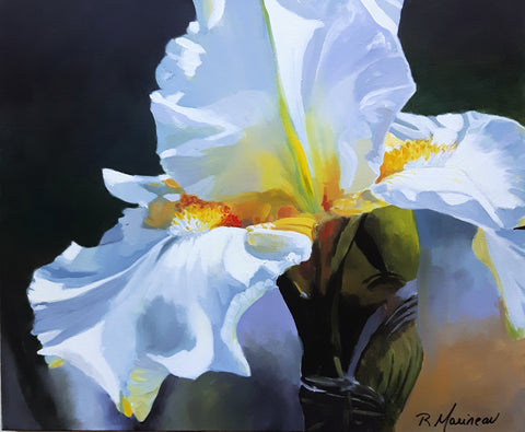 an acrylic painting featuring a close up on the head of a white iris, against dark green almost black ground. By Nova Scotia Artist Rhonda Marineau