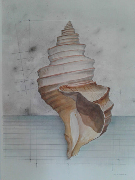 Shell Study (Oyster Drill)