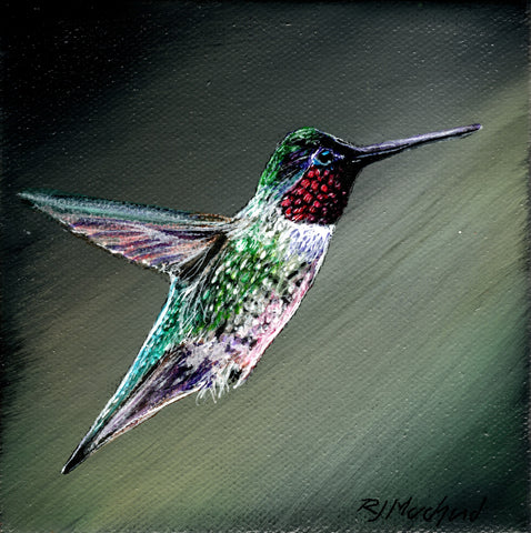 Radiant (ruby throated hummingbird)